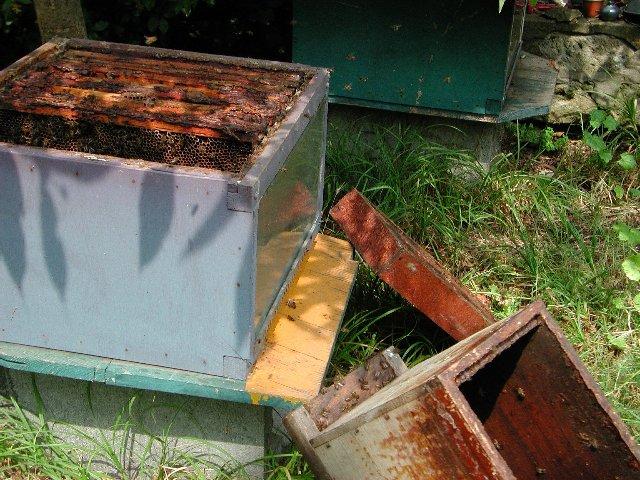 Les dernières abeilles rentrent dans la ruche